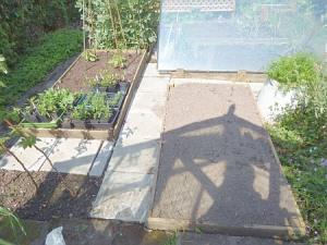 Raised be near greenhouse